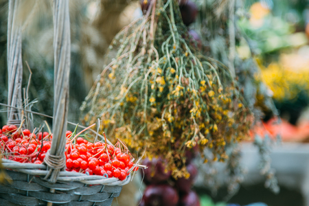 fascicule: Wicker basket with ripe red viburnum and dried flowers on background