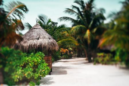 Ware tilt-shift weergave van pad met palmen, planten en gestileerde kleine eilandcabine staande naast weg van resort eiland in de Maldiven op zonnige zomerdag met kopie ruimte zone voor tekst, logo of advertentie