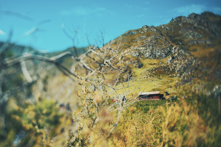 ajenjo: Tilt-shift shooting of: shepherds hut with with surrounding meadows and pastures, bare dry bush or tree in foreground next to wormwood branch, mountains in background, Altai, Russia, Kuyus district
