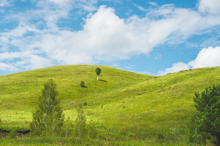 Bright scenery: beautiful bright low hills lit by morning sunlight, birches and meadow in foreground, single tree on the hill, fine blue sky, Altai mountains, Russia