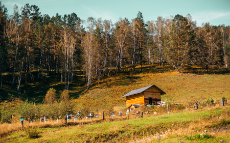 Beautiful autumn landscape: small wooden lodge with hill in background overgrown with dry native grasses and mixed forest; small beehives behind fencing, Altai mountains, Chemal district, Russia