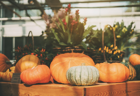 recently: Beautiful still-life of edible ripe pumpkins and just recently harvested for Thanksgiving Day and baskets full of flowers in defocused background, sunny summer day, shallow depth of field