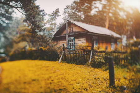 Autumn true tilt-shift scenery with small rustic wooden house located in Altai mountain district of Russia in sparse pine forest with big piny branch and yellow glade in foreground, strong bokeh