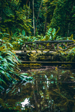 Vertical landscape with jungle forest during summer: small cute empty bridge over lake or pond reflecting in water, multiple plants and tropical trees of rainforest around, huge fern leaves