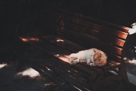 Ginger kitten is laying and sleeping on the bench of chestnut color in a dark place of a park with several bright spots from sun, warm summer day Foto de archivo
