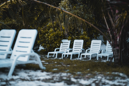 Several rows of the white plastic daybeds on a tropical beach; multiple recliners on the sandy evening beach surrounded by palms, sand, grass and other plants