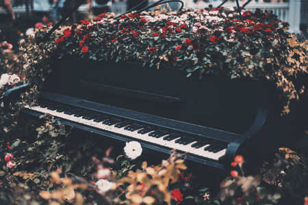 An old black abandoned concert grand with cracked keys outdoors overgrown by roses; flowerbed on a street stylized as a noir art installation with piano with flowers around and inside