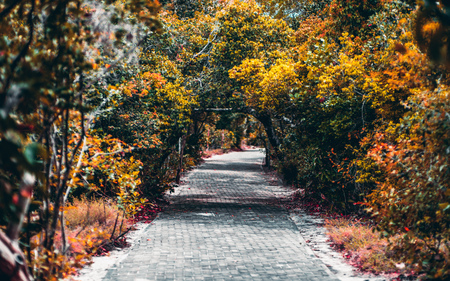 Beautiful vivid passage between tropical trees and plants of a national parkland in Praia do Forte, Bahia state of Brasil; spots of sunlight on the paved pathway, colorful lush foliage, a dark alley