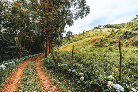 Tropical scenery with the dirtroad stretching into the distance and bending, the alley with trees and flower, fence with barbed wire and poles, low hills overgrown with greenery; wide-angle shooting