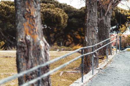 Three poplar trees in a public park with a flaked metal fence, the lawn in the background, paving stone on the right on a warm overcast day, shallow depth of field, Lisbon, Portugal