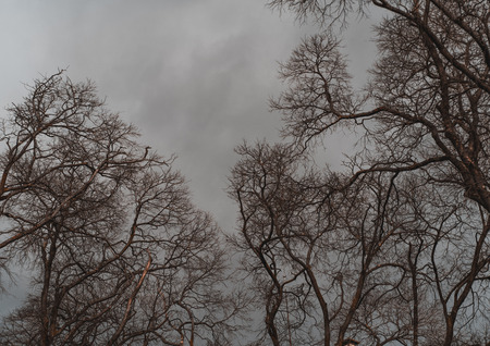 Numerous branches of bare trees outdoors on a very overcast and moody winter day with a grey dull sky in the background Stok Fotoğraf