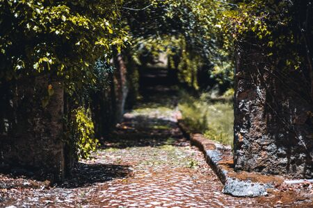 Stone gate follows to an abandoned garden with a dark nature corridor stretching into the distance overgrown with ivy and other green plants, with paving stone on the ground, selective focus