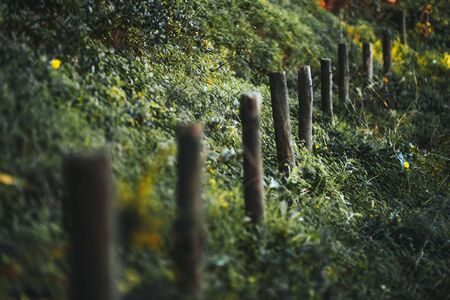 A close-up view with a shallow depth of field of a row of wooden poles as a part of an old fence or just denoting the border between the two areas surrounded by greenery on the hill; selective focus Banque d'images