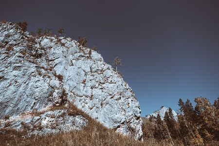 A huge cliff above a meadow, sunny autumn day, clear sky, hill ridge behind, plenty of trees around: birches, firs, cedars, and other conifers; bluish colors, wide-angle shot, Altai mountains, Russia