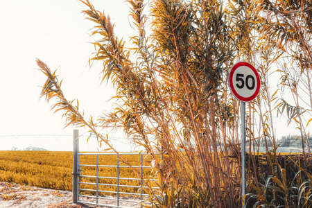 """A colorful minimalistic shot with a red and white speed limit road sign """"60"""" near the agricultural field and a small metal fence, thickets of high sedge of yellowish color in the foreground, Portugal"""