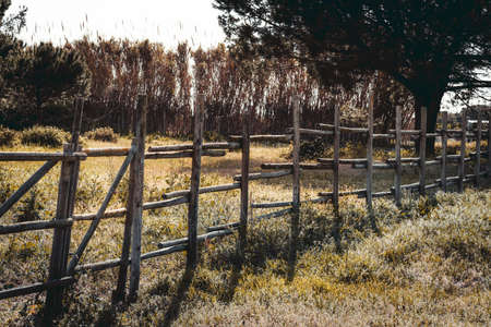 A long wooden fence on an agricultural or a grazing field in a rural area on a bright warm day casting contrast shadows on the native grasses in the foreground; tall reeds and dark wood behind fencing