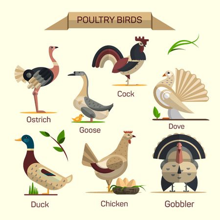 Farm birds vector set in flat style design. Poultry domestic animals icons collection. Goose, hen, duck, gobbler, dove.