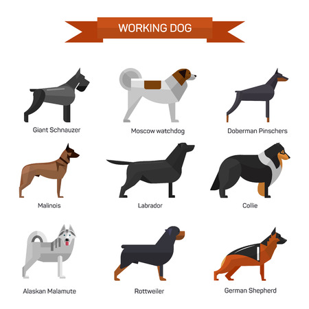 Dog breeds vector set isolated on white background. Illustration in flat style design. Icons and emblems. Labrador, malamute, rottweiler, collie, german shepherd.