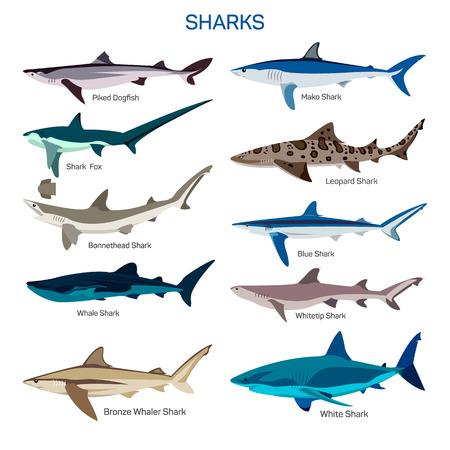 Shark ryby wektor zestaw w płaskiej konstrukcji stylu. Różnego rodzaju gatunków rekinów ikony kolekcji. Pojedynczo na białym tle. Ilustracje wektorowe