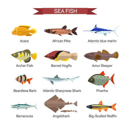 barracuda: Fish vector set in flat style design. Ocean, sea and river fishes icons collection. Isolated on white background. Illustration