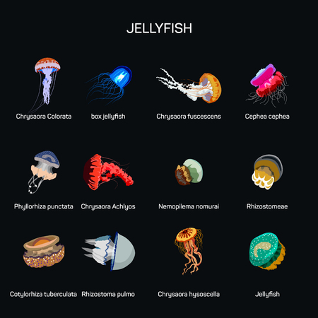 oceanography: Jellyfish vector set in flat style design. Illustration