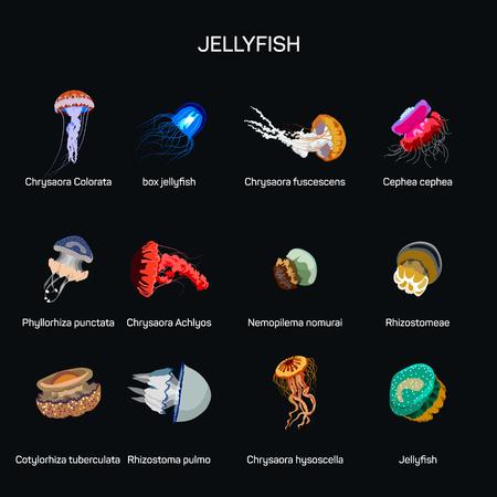 oceanography: Jellyfish vector set in flat style design. Illustration