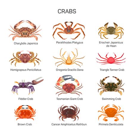 crab legs: Crabs vector set in flat style design.