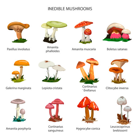 genus: Inedible mushrooms set of icons isolated on white background. Different types of mushrooms.