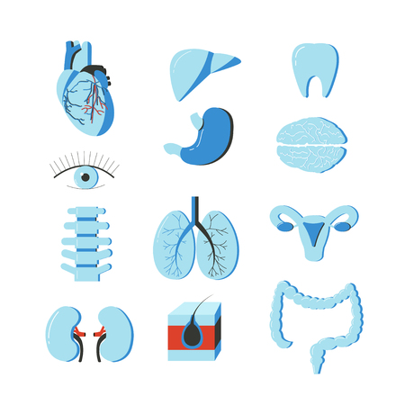 human icons: Vector set of human body organs. Anatomy design elements and icons isolated on white background.