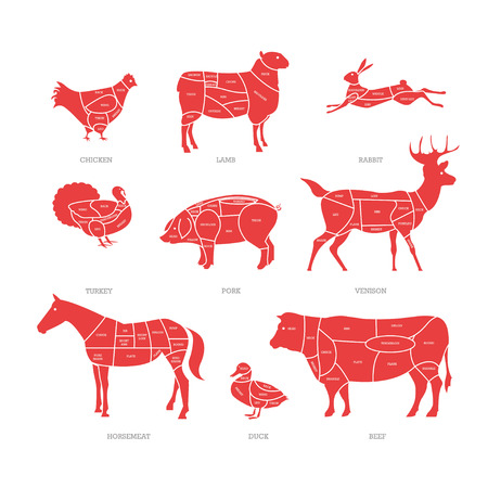 Butcher shop concept vector illustration. Meat cuts. Animal parts diagram of pork, beef, lamb. Illustration