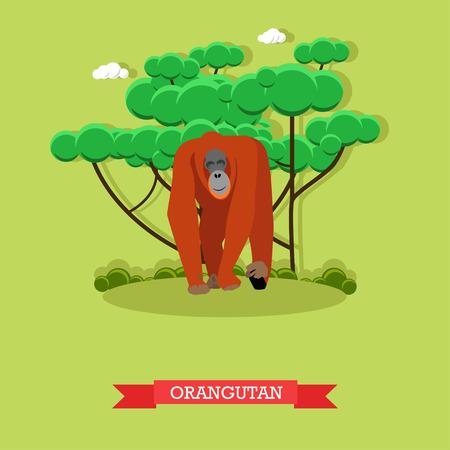 primate biology: Wild orangutan vector illustration in flat style. Monkey - zoo animal design elements and icons.