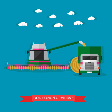 harvester: Combine harvester gathers the wheat in the field, and automatically loads it in the truck. Vector illustration in flat design