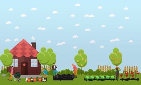 horticulture: Gardeners working in the garden, digging the garden using shovel and planting cabbage, tomatoes and flowers. Oranges and pears on trees. Horticulture, agriculture. Flat design vector banner