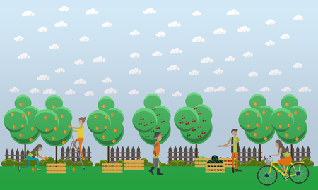 realization: Harvesting and realization concept vector illustration in flat style. Gardeners picking peaches and putting them into wooden boxes, selling watermelon, tomatoes and cabbage.