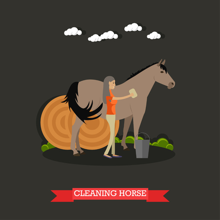 breeder: Vector illustration of horse breeder female cleaning horse and round hay bales behind them. Grooming horses flat style design element. Illustration