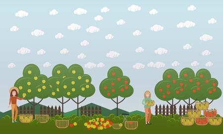 Vector illustration of women picking apples in fruit garden. Apple hunting season concept. Flat style design.