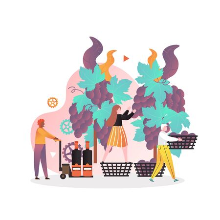 Male and female characters picking grapes from vineyard, vector illustration. Harvesting, first step of wine making process. Wine production concept for web banner, website page etc. Ilustração