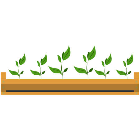 Seedling in wooden garden crate, flat vector isolated illustration. Growing garden plant sprouts. Gardening, farming. 矢量图像