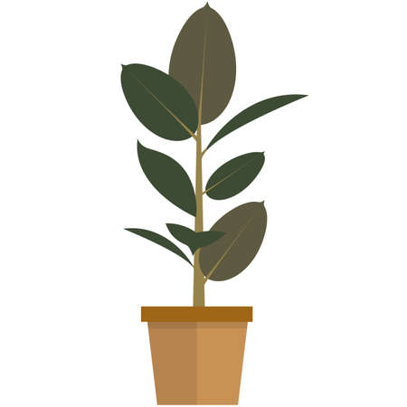 Green houseplant in pot flat vector isolated on white 矢量图像
