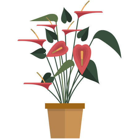 Houseplant with red flower and green leaves flat vector