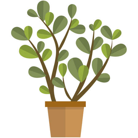 Jade plant flower in pot flat vector isolated on white
