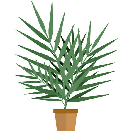 Exotic home plant in pot flat vector isolated on white