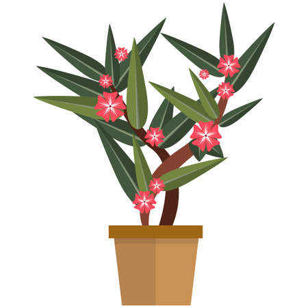 Blooming flower plant in pot flat vector isolated on white
