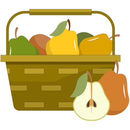 Wicker basket with pears harvest flat vector isolated on white