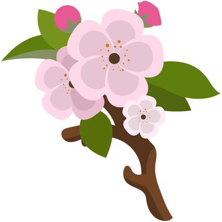 Sprig of flowering fruit tree branch from garden flat vector 矢量图像