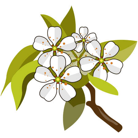 Blossom apple tree branch flat vector isolated on white