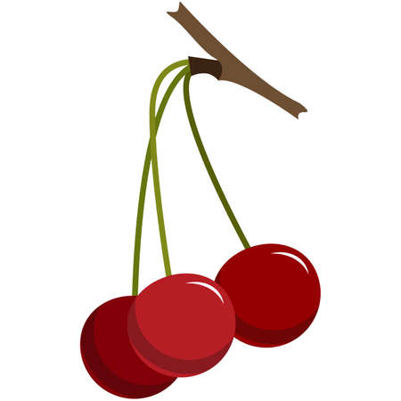 Cherry berries tree branch flat vector isolated on white