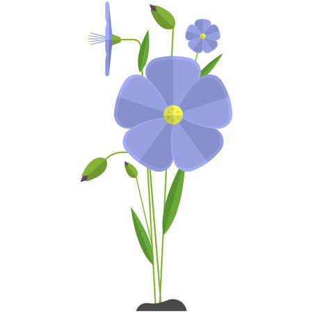 Flax flower vector linen plant illustration icon