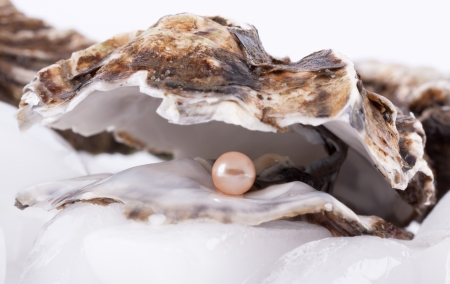 Oysters on ice with Pearl Stock Photo