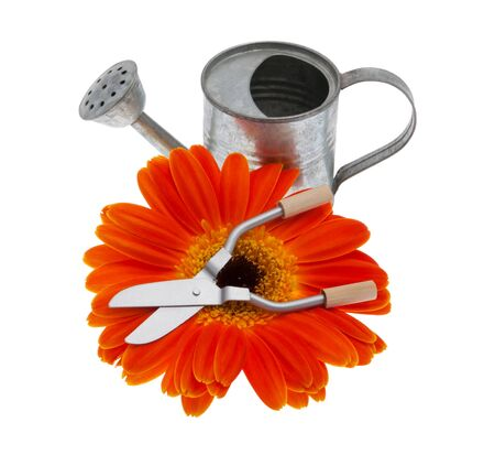 trimmers: Garden tools with gerberas in front of white background
